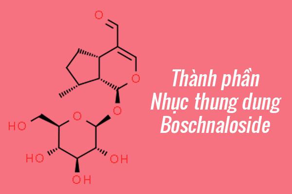 Thành phần của Nhục thung dung: Boschnaloside